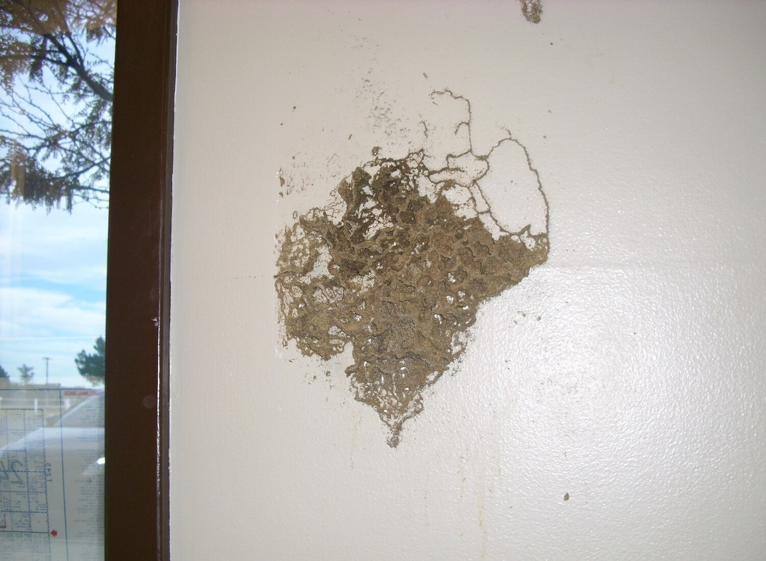 Termites Tunnel on the interior of a wall.