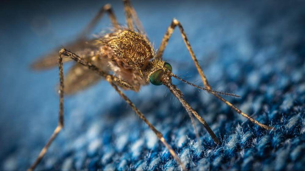 Close up view of a mosquito on jeans