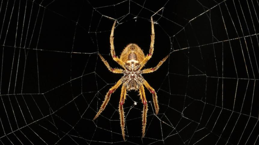 brown spider on web