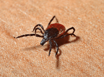 a brown spiden on a wooden surface